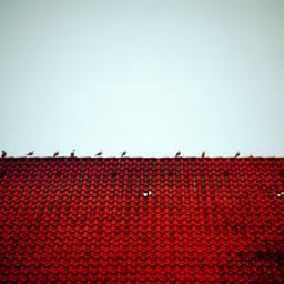keepitsimple roof birds lomoeffect red