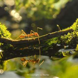 bokeh cute spring summer ant