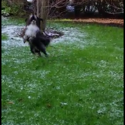dog snow fun winter