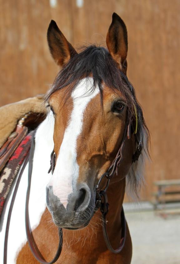 #Pferd #portait #horse #pretty #horses