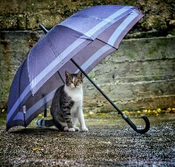umbrella petsandanimals nature photography rain
