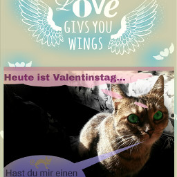 ecvdaymoodboard valentinesday valentinsday valentinstag cat