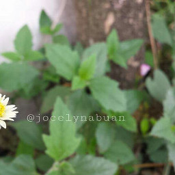 love emotions flower freetoedit oldphoto