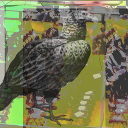 art people vulture abstract