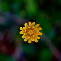 freetoedit minimal flower paid dailyinspiration