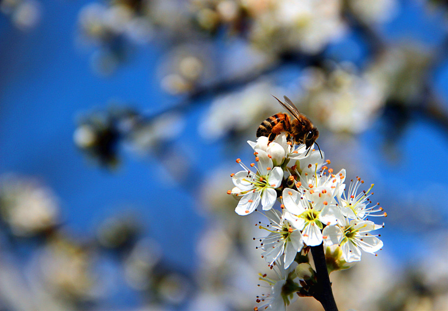 #nature  #flower  #bee  #spring