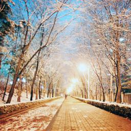 snow winter night light road
