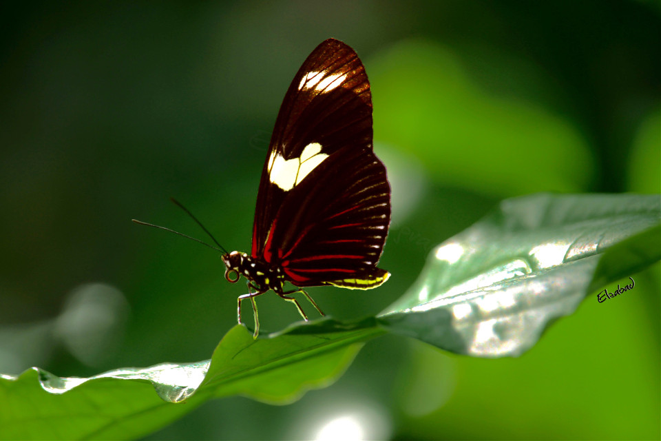 #butterfly #nature #leaf