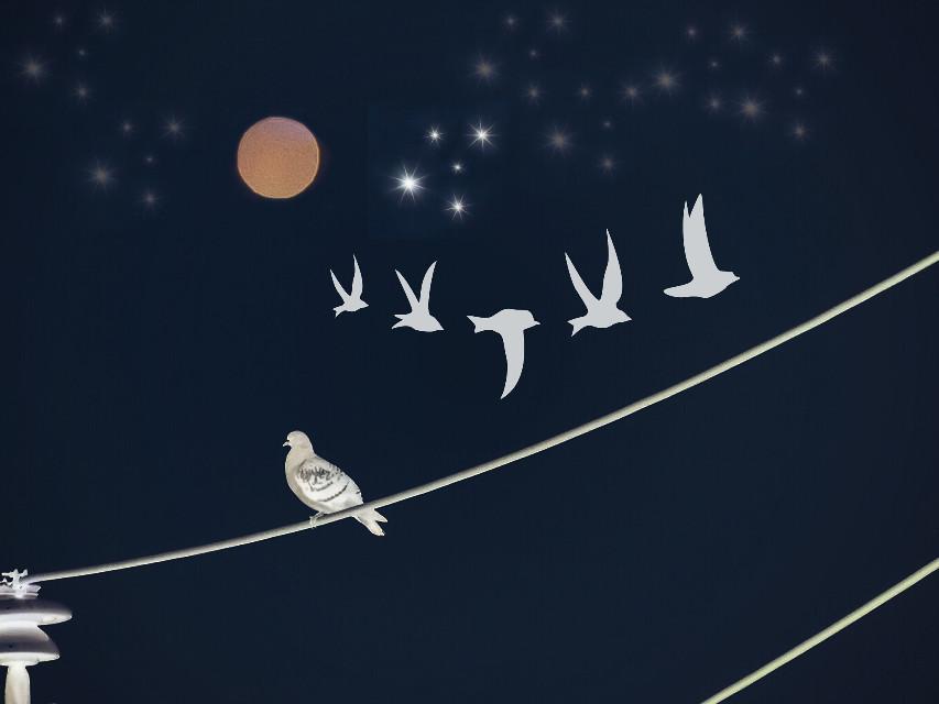 #lunar #moon #birds  #nature  #madewithpicsart  #edited #interesting