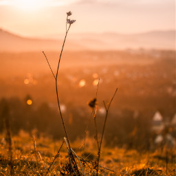 sunset flower photography bokeh nature