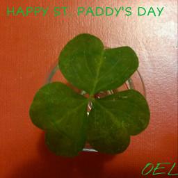 shamrock irish holiday saint