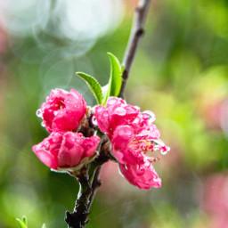 spring flowers rain nature freetoedit
