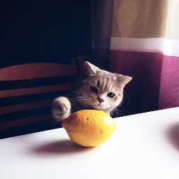 freetoedit fteplayfulcat