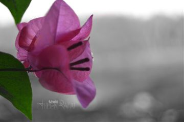 colorsplash flower macro nature photography