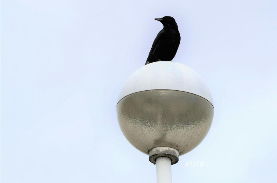 #brightbackground #bird #dailyinspiration #photography