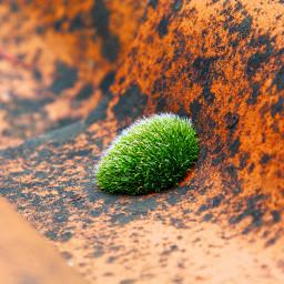 nature photography nikon