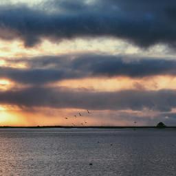 sunrise ocean birds photography