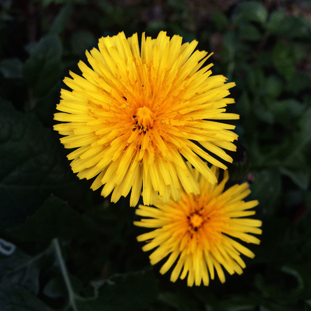 Çiçek kadar narin yüreklere bahar geldi! #macro #flower #yellow #nature #photography #art #interesting #hdr #picart #emotions #love #secret #goodmorning