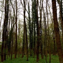 art trees park alsace green