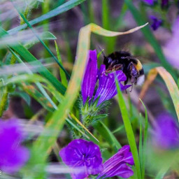 natura animal flower bee scatto