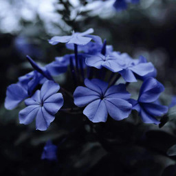 flower brightcolor nature photography blue