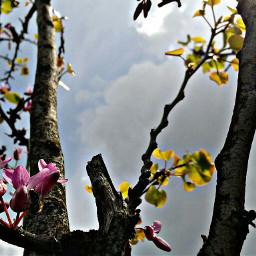 freetoedit nature flower sun ezdlgc