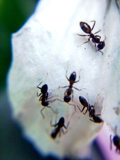 earthday nature ants ant insect freetoedit