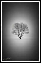blackandwhite photo tree vigniteeffect