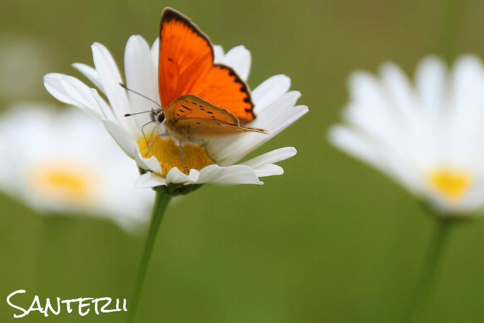 #butterfly  #summer