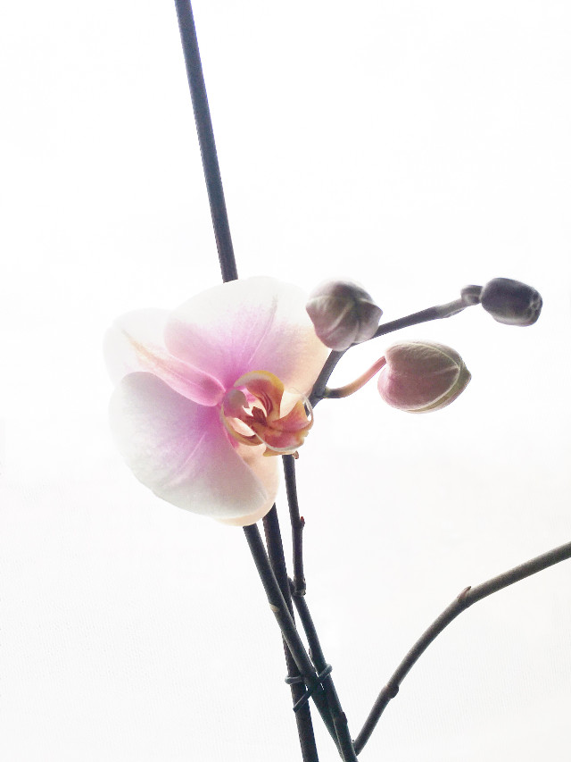 #orchids #iphonephotography