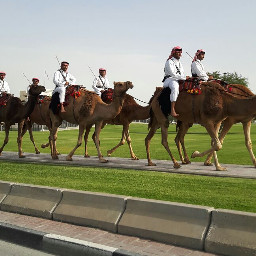 qatar doha inmotion dailyinspiration camel freetoedit
