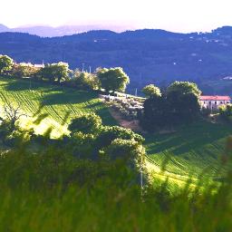 field vegetation green photography freetoedit