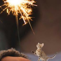 ftesparkler edited cat animal freetoedit