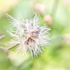macro nature interesting dailyinspiration macroflower