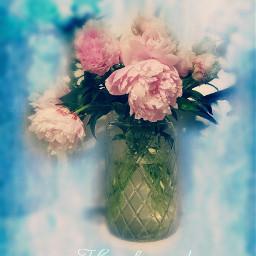 peonies flowercard blureffect hueeffect