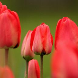 freetoedit flower nature spring