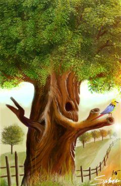 wdptrees nature spring bird tree