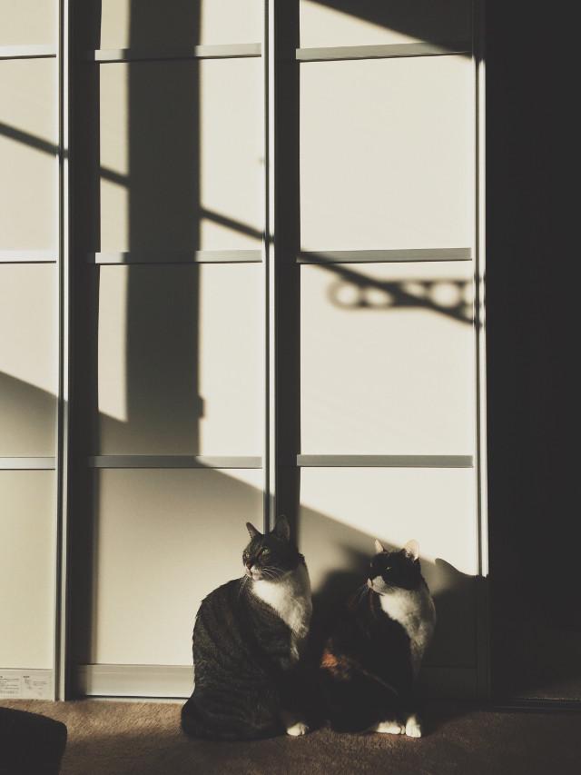 #FreeToEdit #cat