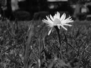 flower interesting photography people nice freetoedit