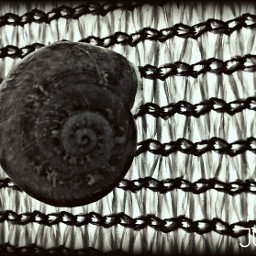 caracol cargol blackandwhite photography blancoynegro