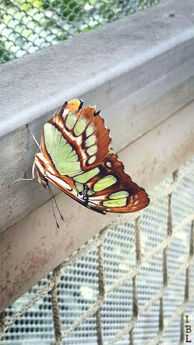 My son is sending me pics to post.  Yay!   #dynamictension #paphotochallenge #colorful  #nature  #butterfly  #insects #dailyinspiration  #moodygardens #houston  #beauty #nofilter