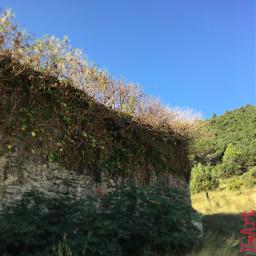 nature photography travel wall ivy freetoedit