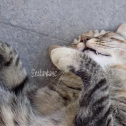 cat cute petsandanimals sleeping photography