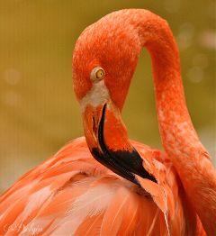flamingo bird animals nature naturelovers