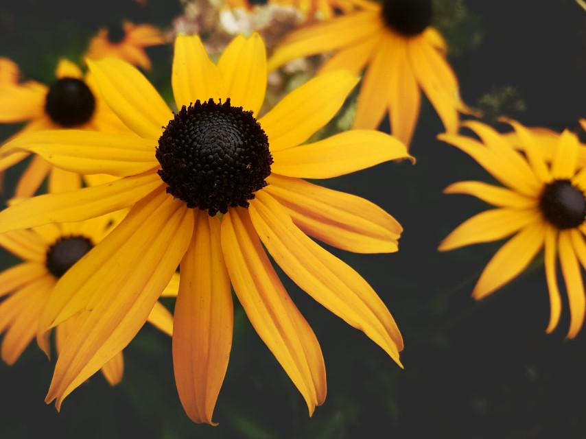#nature #mygardenflower  #flowers