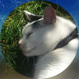 petcat framed blueeffect cute