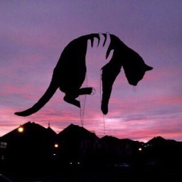 cats aesthetics pink purple sunset