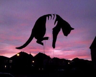 #cats #aesthetics #pink #purple #sunset