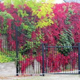 photography foliage trees creepers urban